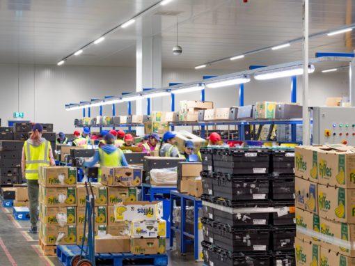 Banana Ripening Warehouse
